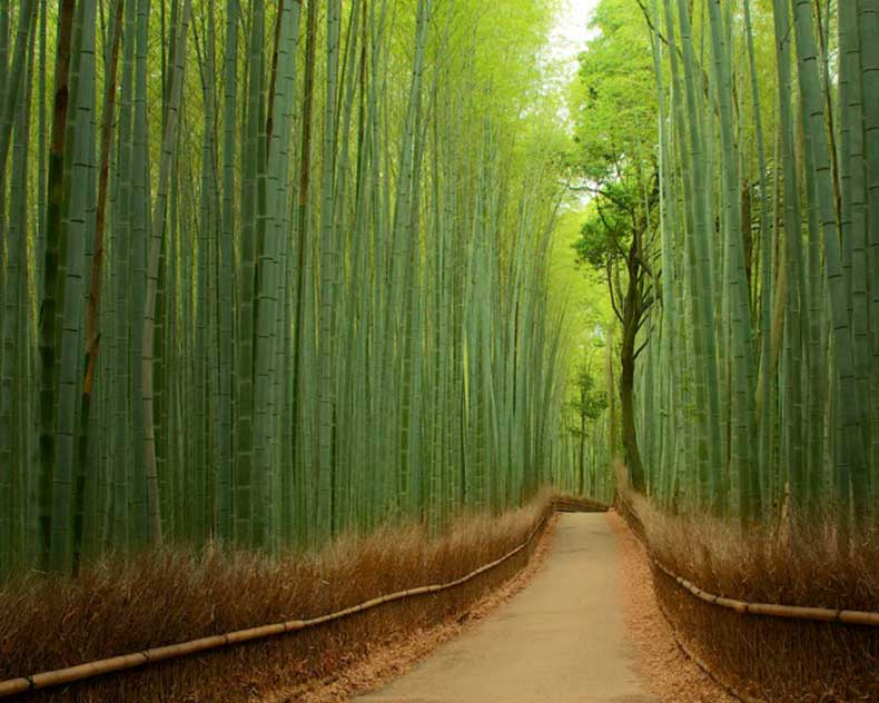 Path-inside-the-bamboo-forest-in-Sagano