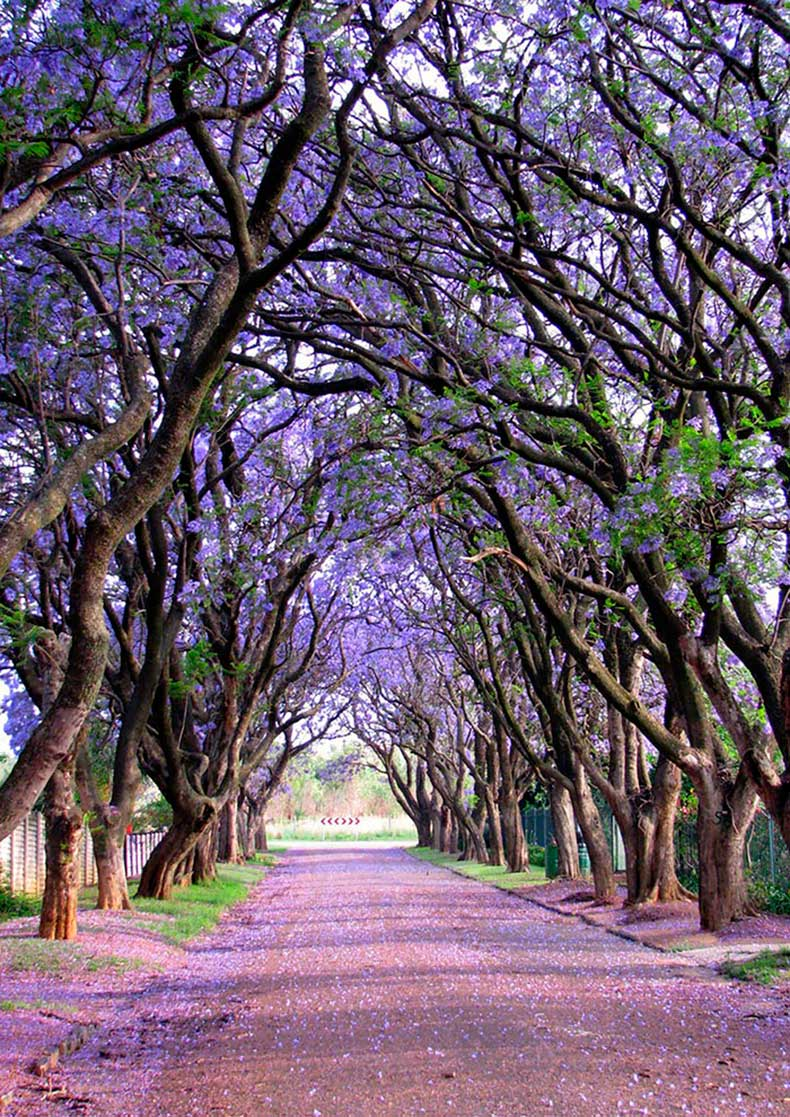 14.-Cullinan-South-Africa